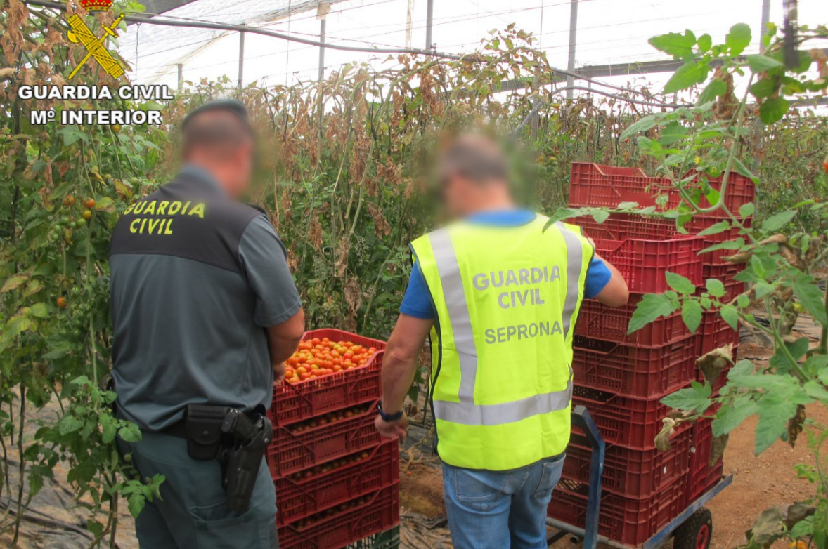 Over €100 million worth of fake food and drinks seized in latest