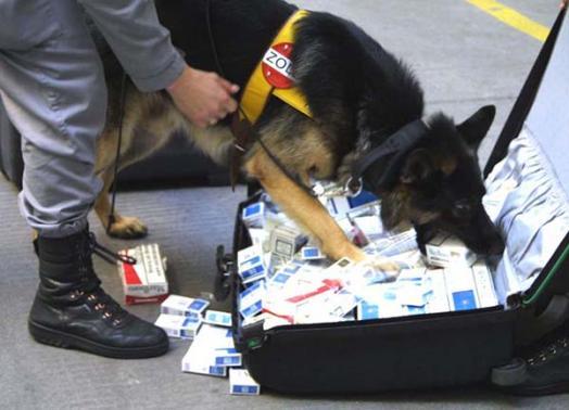Austria police dog