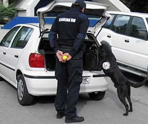 Customs dog (Croatia)